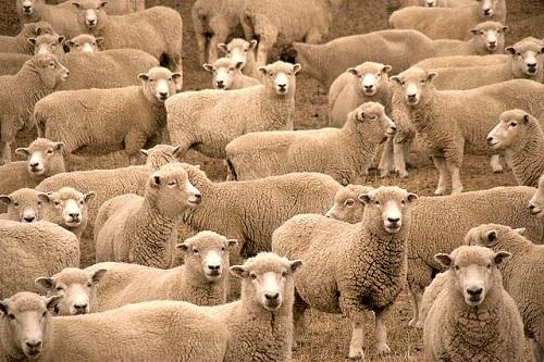 Le regole per dormire bene la notte e non farsi fissare dalle pecorelle